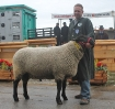 Rassesieger ZLF 2012 BE0001 mit 175 kg_1