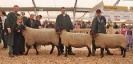 Reservesiegergruppe Fleischschafe ZLF 2012_1
